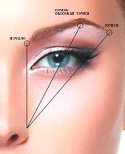 Как определить границы брови